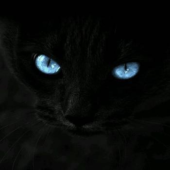 عکس پروفایل گربه چشم آبی
