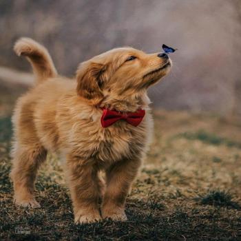 عکس پروفایل سگ پاپیون پوش