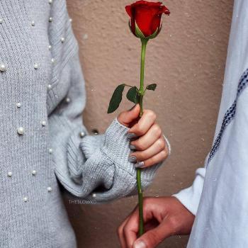 عکس پروفایل گل رز عاشقونه