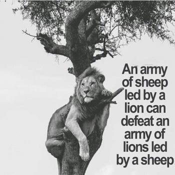 عکس پروفایل ق️درت يه ارتش گوسفند كه توسط يه شير رهبرى ميشه
