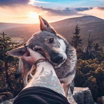 عکس پروفایل سگ و طبیعت