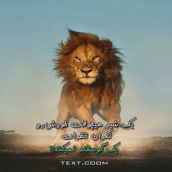 عکس پروفایل یک شیر هیچوقت خودش رو نگران نظرات یک گوسفند نمیکنه