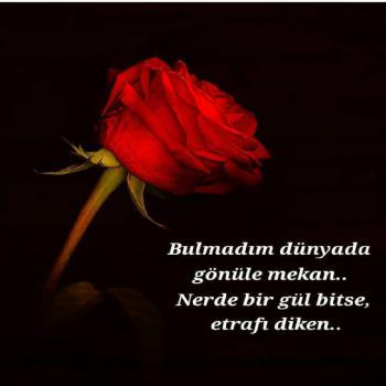 عکس پروفایل ترکیه ای توی دنیا جایی واس عشق پیدا نکردم هرجا که گل