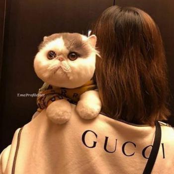 عکس پروفایل ست دختر با گربه سفید
