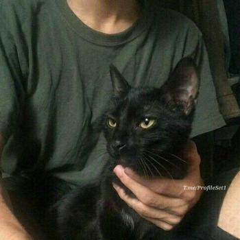 عکس پروفایل ست پسر با گربه سیاه