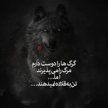 عکس پروفایل تیکه دار گرگها را دوست دارم مرگ را میپزیرند اما تن به قلاده نمیدهند