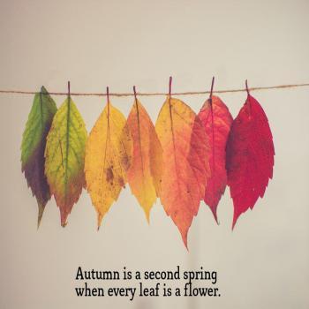 عکس پروفایل انگلیسی پاییز بهار دومه با این تفاوت که توی پاییز هر برگی خودش یه گله