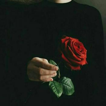 عکس پروفایل ست شاخه گل رز دست پسر