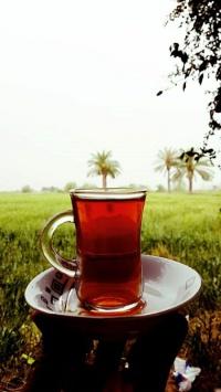 عکس استوری عکس چای در طبیعت