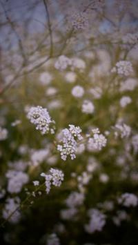 عکس استوری عکس گل بهاری