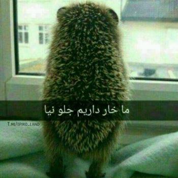 عکس پروفایل تیکه دار ما خار داریم جلو نیا