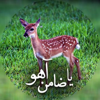 عکس پروفایل یا ضامن آهو امام رضا