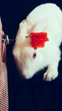 عکس استوری خرگوش باحال اینستا 19974