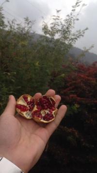 عکس استوری جنگل پسرانه خوشگل در اینستاگرام 20363