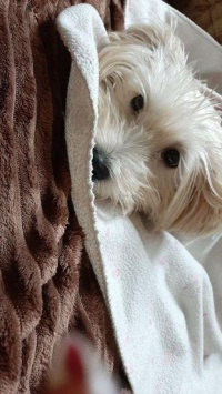عکس استوری سگ خفن اینستا 21564