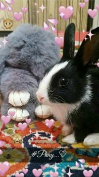 عکس استوری خرگوش story باحال اینستا 21047
