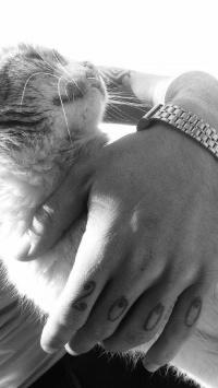 عکس استوری گربه قشنگ در اینستا 21303