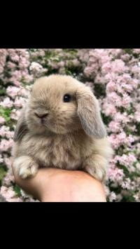 عکس استوری خرگوش باحال در اینستاگرام 21197