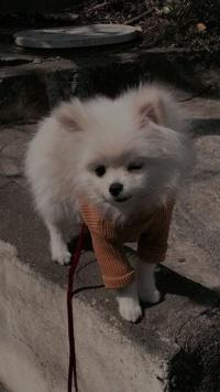 عکس استوری سگ خوشگل اینستا 21557