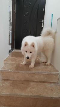 عکس استوری سگ سفید زیبا در اینستا 21527