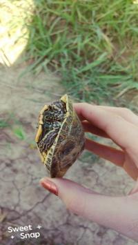 عکس استوری لاکپشت زیبا در اینستا 21407