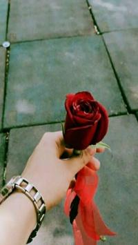 استوری استوری گل دخترونه قشنگ اینستا 20135