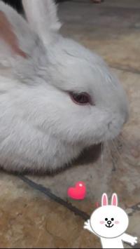 عکس استوری خرگوش جالب اینستاگرام 21187