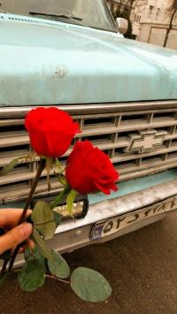 استوری استوری گل زیبا اینستا 21764