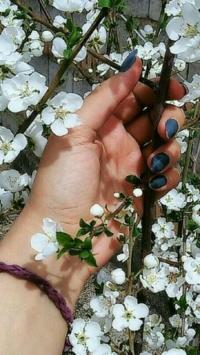 عکس استوری شکوفه جذاب اینستاگرام 21287