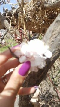 عکس استوری شکوفه جالب در اینستا 21503