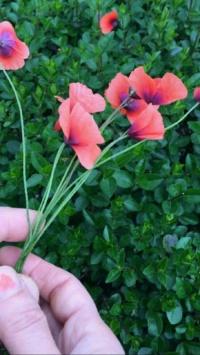 عکس استوری گل دخترونه جالب برای اینستا 20263