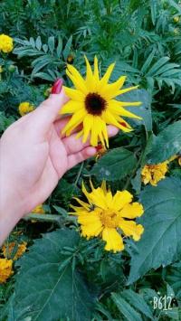 عکس استوری گل قشنگ برای اینستا 21721