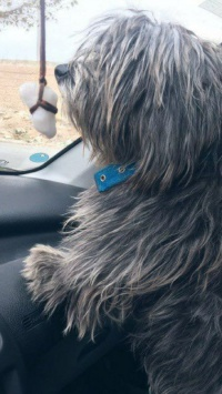 عکس استوری سگ زیبا برای اینستا 21515