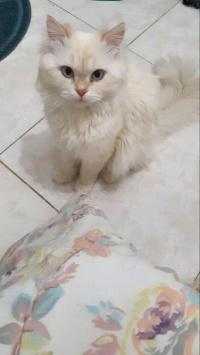 عکس استوری گربه خوشگل در اینستاگرام 19834