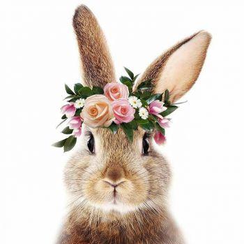 عکس پروفایل دخترونه خرگوش بامزه و خوشگل