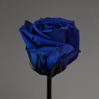 عکس پروفایل گل رز آبی خاص و شیک