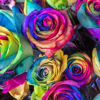 عکس پروفایل گل های رنگارنگ شاد