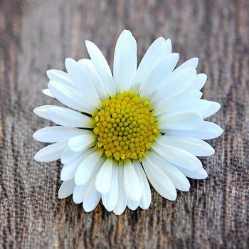 عکس پروفایل گل سفید زیبا ساده