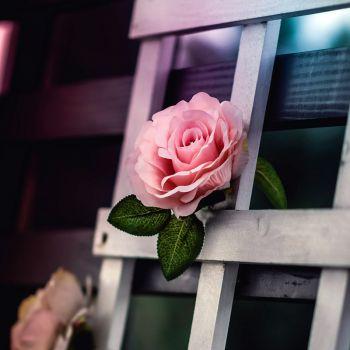 عکس پروفایل گل صورتی رمانتیک باکلاس