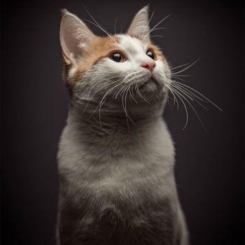 عکس پروفایل گربه با مزه دوست داشتنی