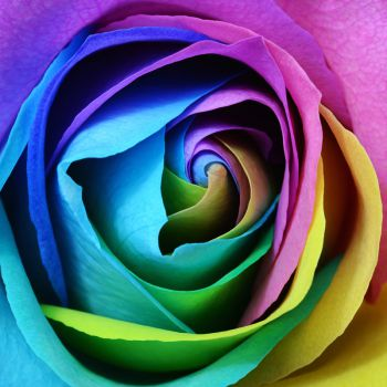 عکس پروفایل گلبرگ های رنگارنگ گل