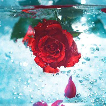 عکس پروفایل سایه گل بر روی باران