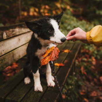عکس پروفایل سگ بامزه در هوای پاییزی