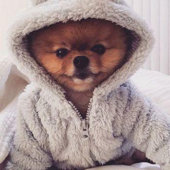 عکس پروفایل سگ گوگولی بامزه