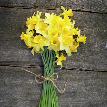 عکس پروفایل دسته گل زیبای نرگس زرد