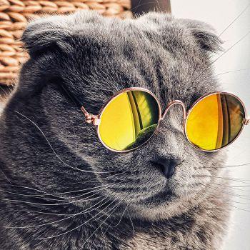 عکس پروفایل گربه لاکچری ناز باکلاس با عینک