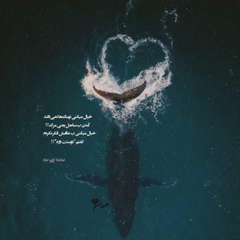عکس پروفایل خیال میکنی نهنگ ها نمیداند آمدن به ساحل یعنی مرگ
