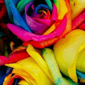 عکس پروفایل گلهای زیبا زنگی و شاد