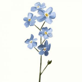 عکس پروفایل گل آبی زیبا نقاشی آبرنگی