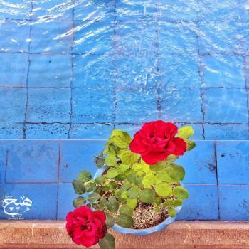 عکس پروفایل گلدون زیبا کنار حوض آب